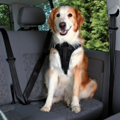Autotuig Dog Protect - in diverse maten